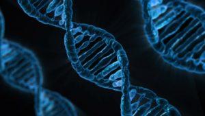 遺伝子の配列