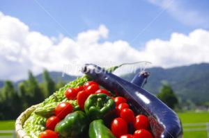 カラフルな夏野菜